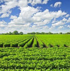 אבטחת שטחים חקלאיים